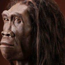 Homo Erectus características y extinción
