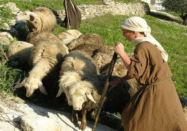 domesticación de los animales
