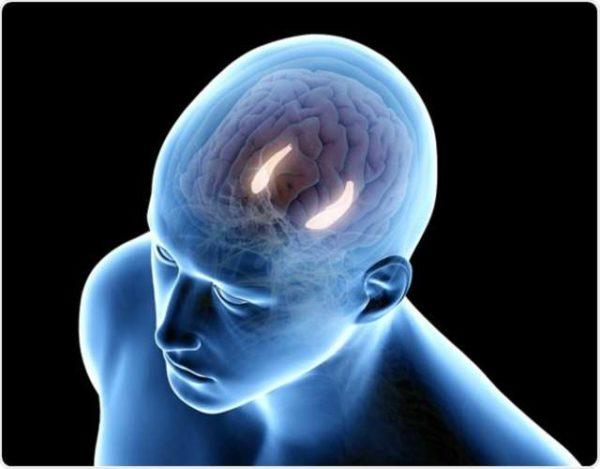 Qué es el hipocampo y cuál es su función