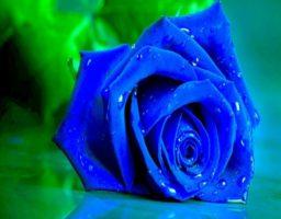 Rosales azules