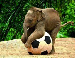 Animales más inteligentes del mundo (1)