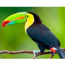 Las aves exóticas más espectaculares